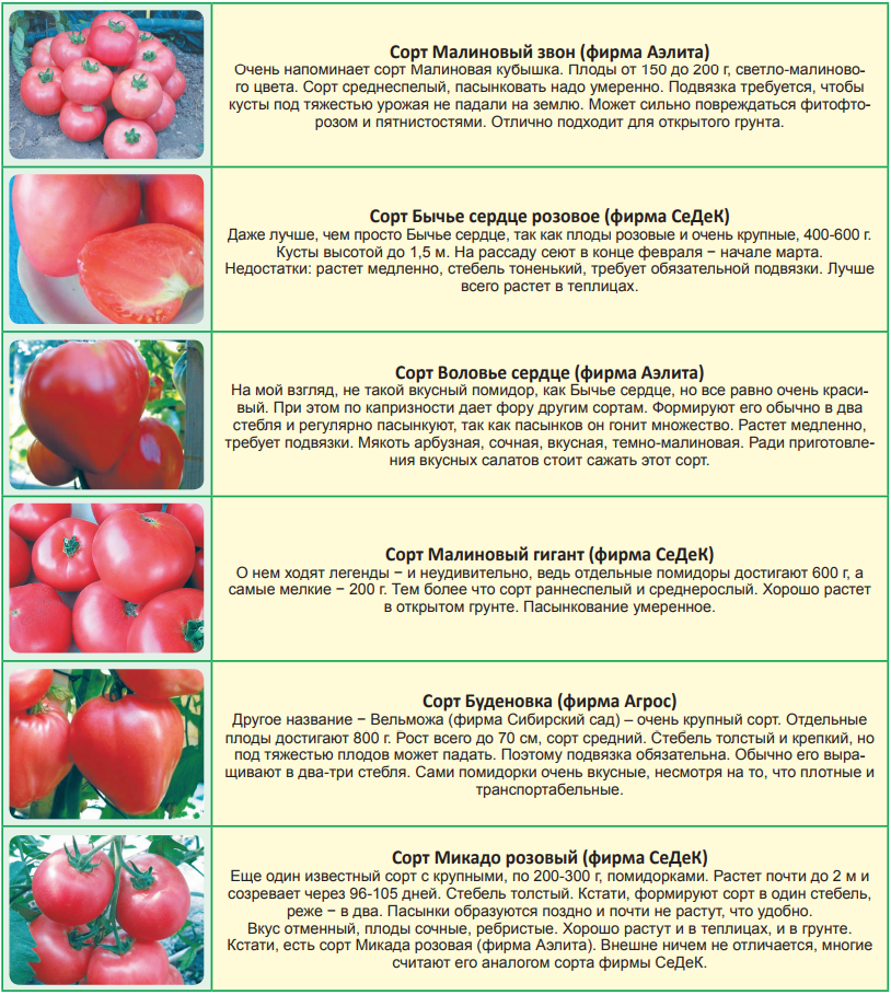 Когда можно высаживать рассаду помидор 88